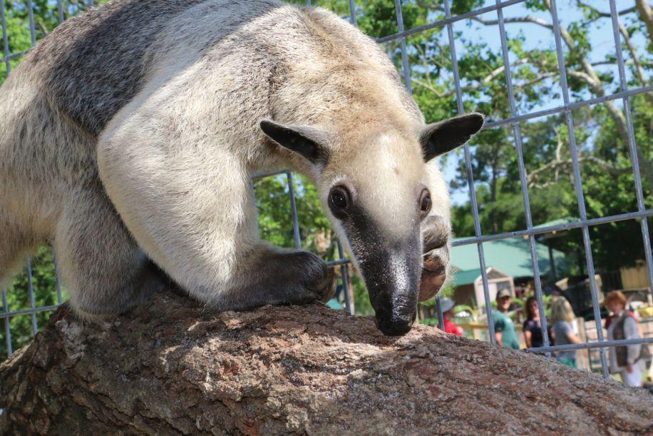 sloth thing
